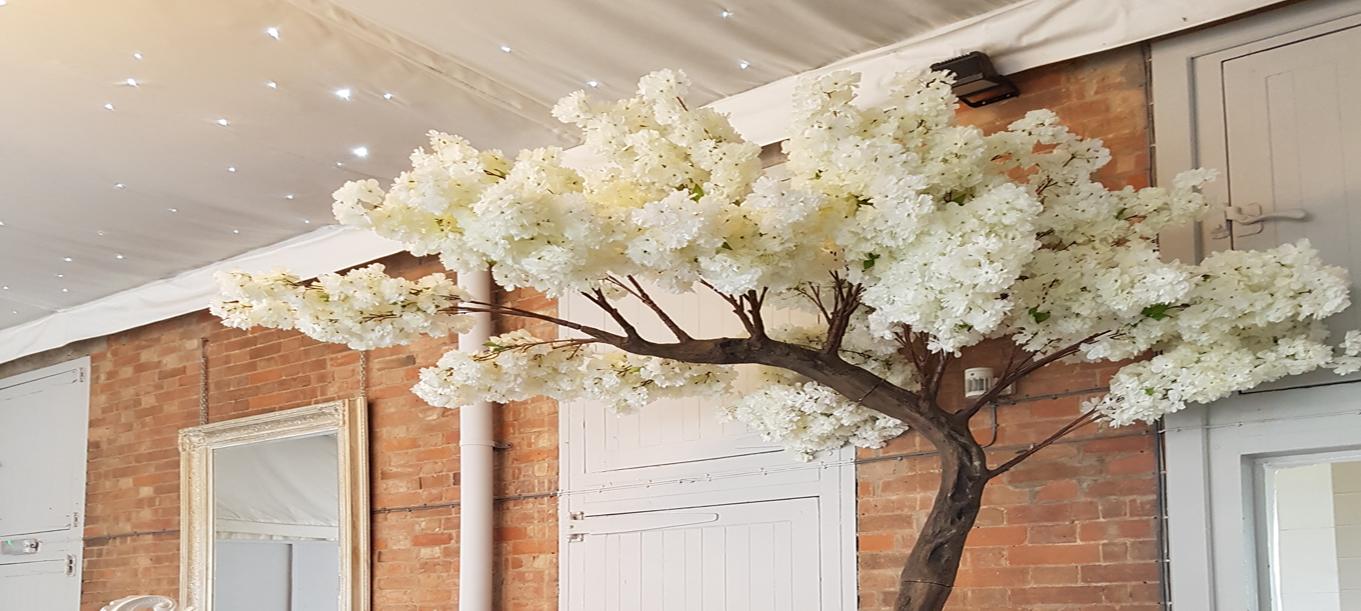 Blossomtree2